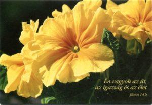 Húsvéti képeslap - borítékos